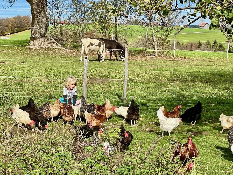 Eselhof-Allinger-Hühner-Hühner-Hühner