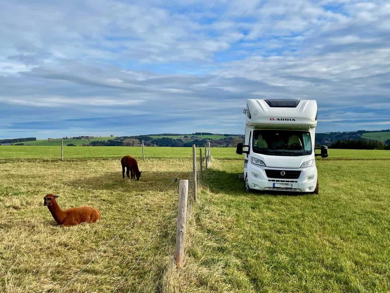 Eselhof-Allinger-Wohnmobil-und-Alpakas