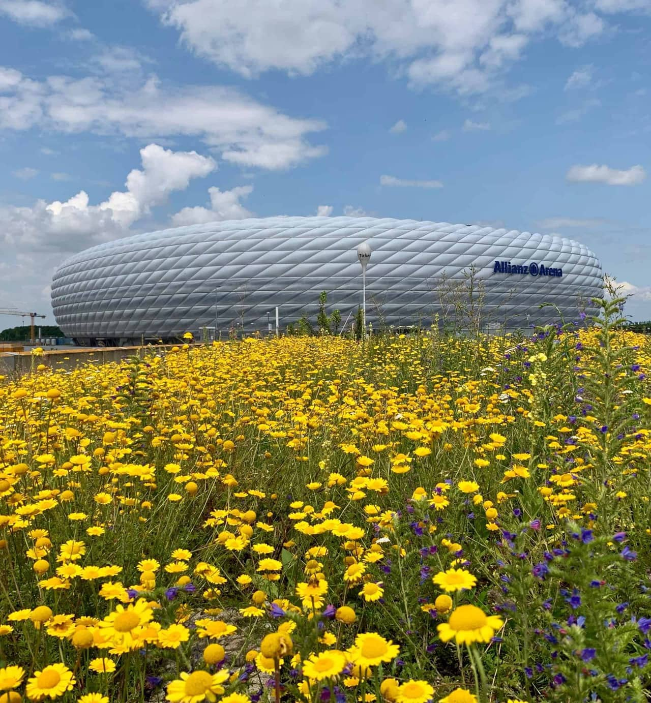 München_Allianz_Arena_Blumenwiese