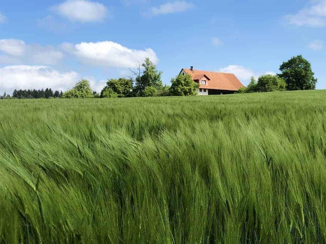 Nürendorf Feld