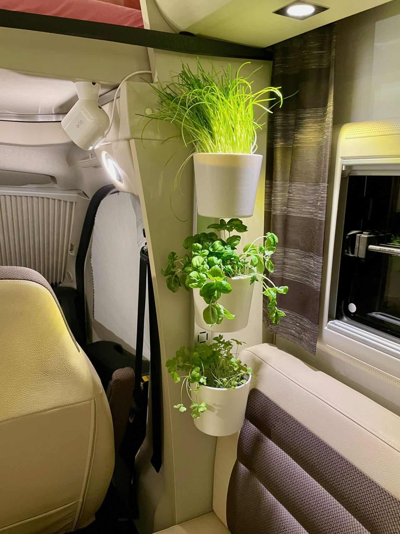 Pflanzen-Kräuter-Blumen-im-Wohnmobil-Einbau-Schiene-Kräuterleiter-Petersilie-Basilikum-Schnittlauch