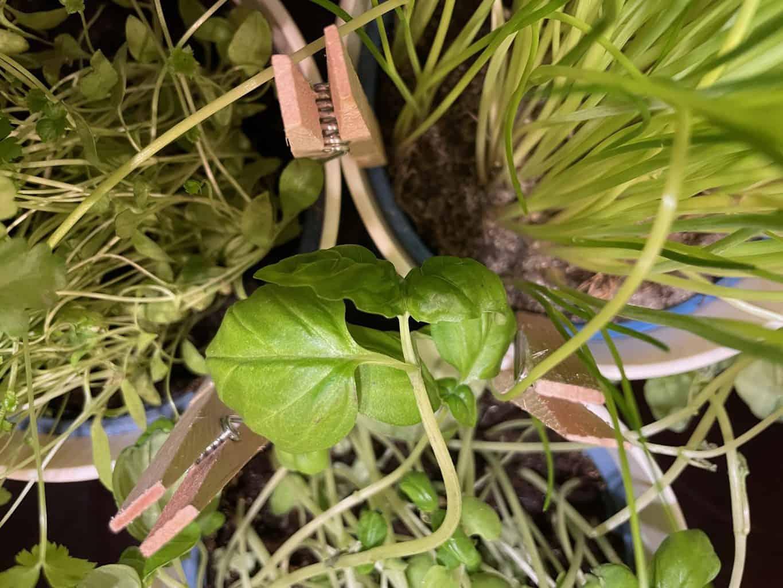 Pflanzen-Kräuter-Blumen-im-Wohnmobil-Einbau-Schiene-Kräuterleiter-abnehmen-und-Sicherung