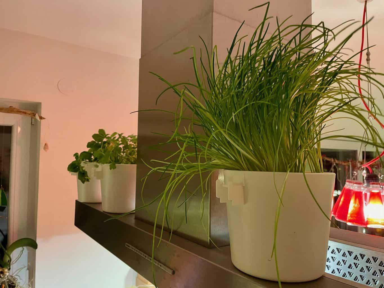 Pflanzen-Kräuter-Blumen-im-Wohnmobil-Einbau-Schiene-Kräuterleiter-in-der-Küche