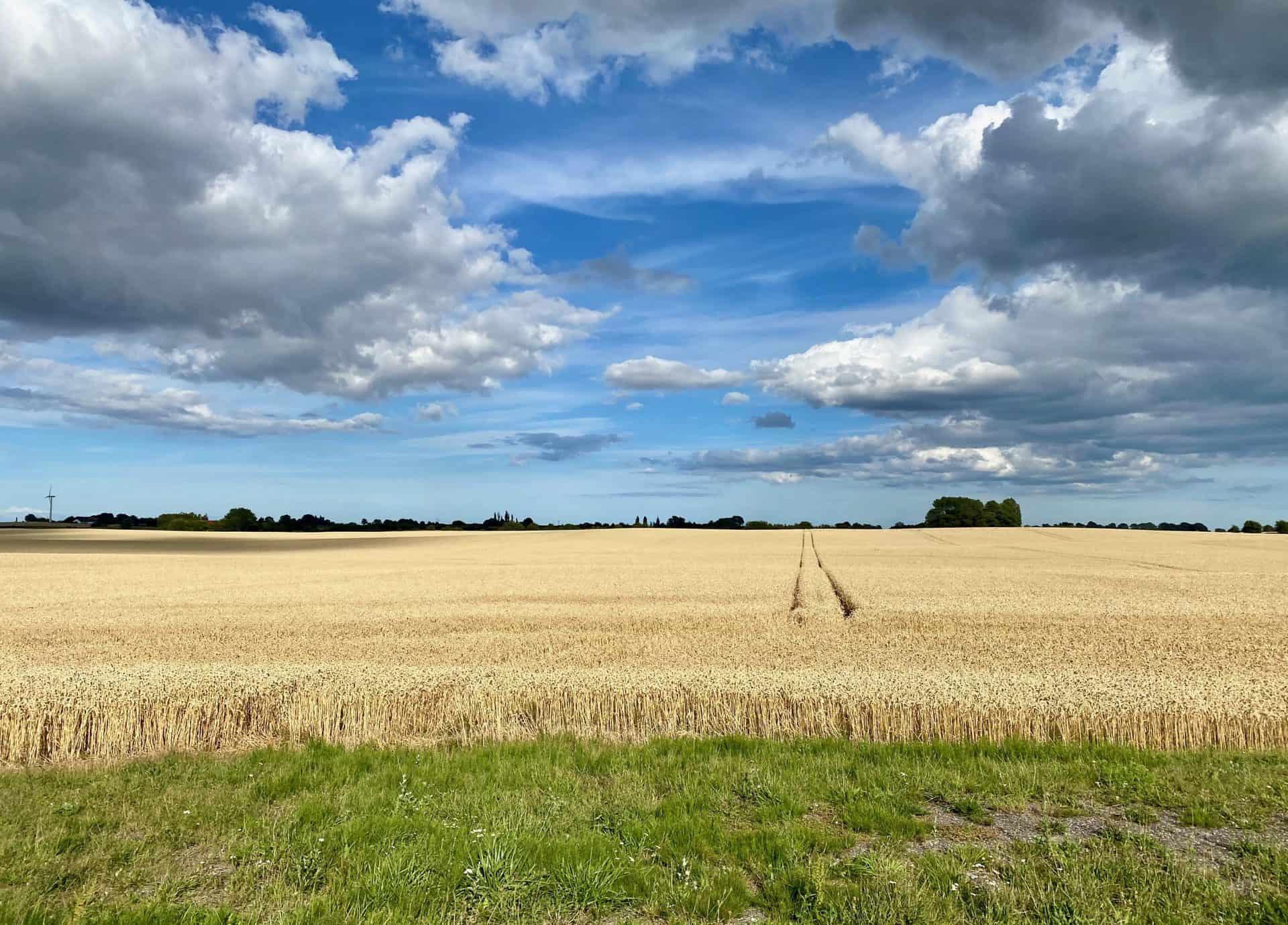 Reise-Wohnmobil-Daenemark-Lolland-Weizenfelder-Kornfelder
