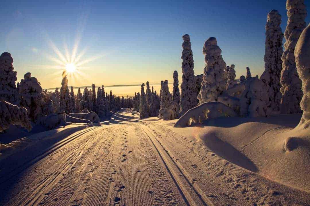 Wald Schnee Langlauf Sonne